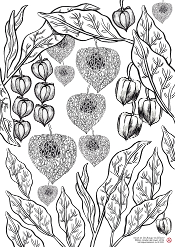 Coloriage Physalis.jpg